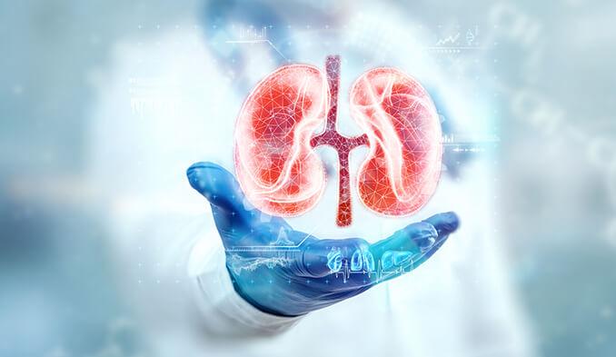 Трансплантация на бъбреци - превю